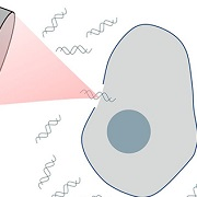 Ultrasound-mediated gene delivery