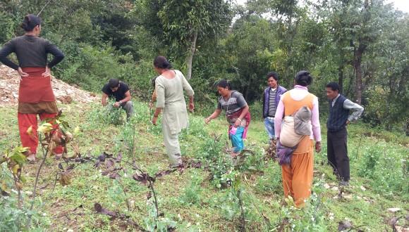 Field Research in Nepal