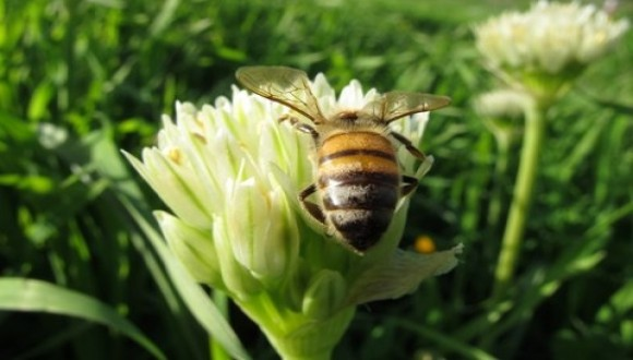 Bees in the Service of Food Security: Challenging the Crisis